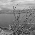 Columbia River by heathernicole00