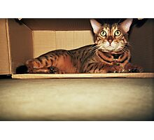 Cat in the Box Photographic Print