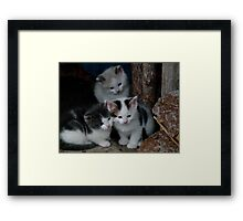 3 Little Kittens Framed Print
