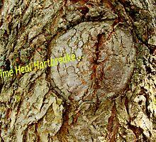 Time Heals Hartbreaks... by Carole Boudreau