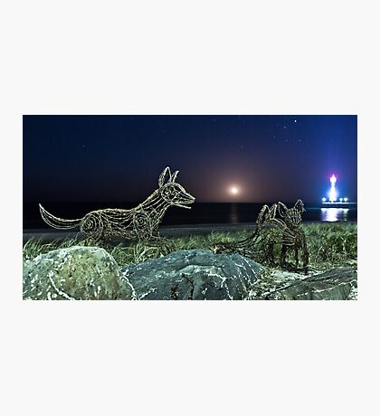 Ghost Dingoes and the Setting Moon Photographic Print