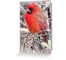 Handsome Mr. Cardinal Greeting Card