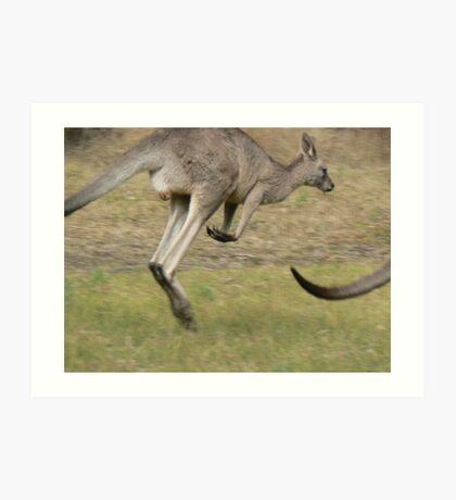 Hopping Kangaroo  Art Print