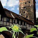 Nuremberg Castle by Zeanana