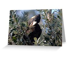 Cracking Banksias Greeting Card