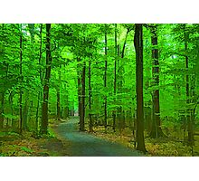 Green Trees - Impressions of Summer Forests Photographic Print