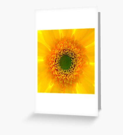Staring At The Sun II Greeting Card