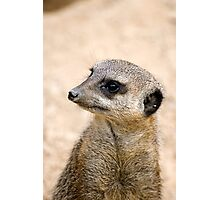 Meerkat Portrait Photographic Print
