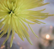 Yellow Dahlia Flower in Still Life by Elizabeth Thomas