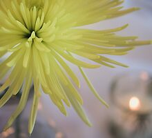 Yellow Dahlia Flower in Still Life by Elizabeth Thomas