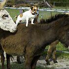 Donkey jockey by Gary Wooldridge