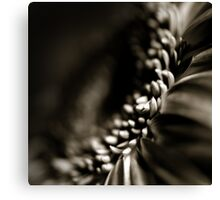 Life Is In The Details XI Canvas Print
