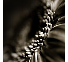 Life Is In The Details XI Photographic Print