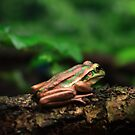 Green & Golden Bell Frog by Damienne Bingham