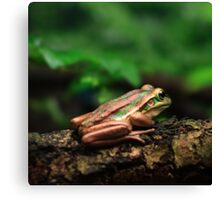 Green & Golden Bell Frog Canvas Print
