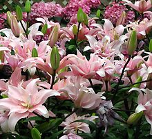 Pink Lilies by psphotogallery
