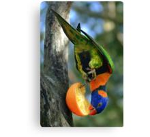 Rainbow Lorikeet II [Print & iPad Case] Canvas Print