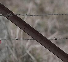 Vintage Barbed Wire Fence by TabithaDesigns