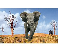 Elephant Charging Photographic Print