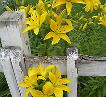Flowers at the fence by hollypen68