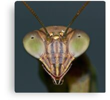 Mantis (5) ! Canvas Print