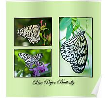 Rice Paper Butterfly Collage Poster