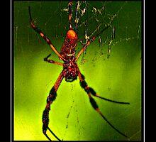 Creepy Spider by George  Link