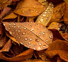 Fallen Leaves by deahna