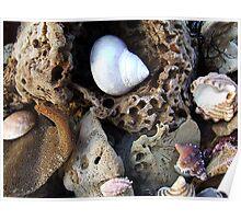 """Sponges & Shells"" Poster"