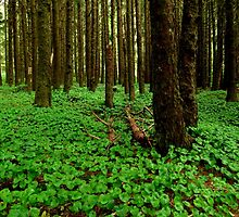 The Forest Floor..Neptune Beach..Yachats, Oregon by trueblvr