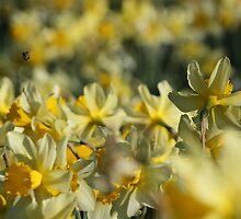 Yellow by Geoffrey Wicking