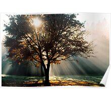 Yarra Ranges Sunrays Poster