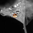 Star of Autumn by Renee Dawson
