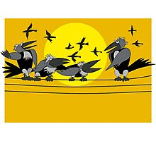 Funny birds Photographic Print