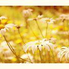 sunshine by Aimelle