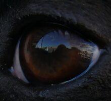 The world thru Jacks eye... by Cazzie Cathcart