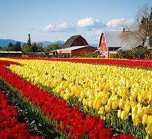 Tulip Fest by Jason Weigner