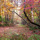Forest Path,  Arkansas Ozark Mountains by NatureGreeting Cards ccwri