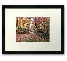 Forest Path,  Arkansas Ozark Mountains Framed Print