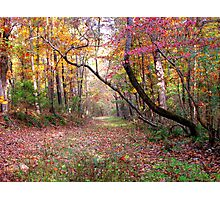 Forest Path,  Arkansas Ozark Mountains Photographic Print