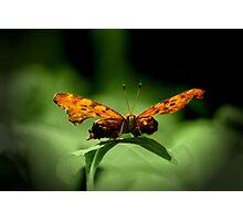 Glow Photographic Print