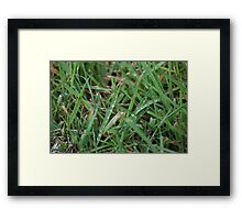 Dew on the grass Framed Print
