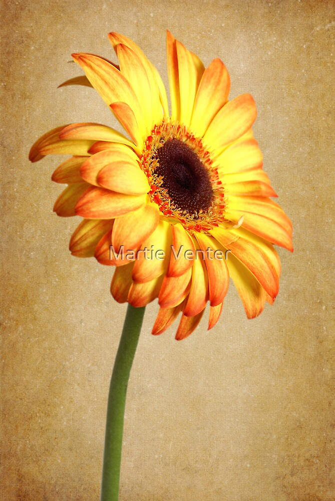 Painted Flames by Martie Venter