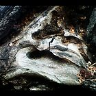 some trees have eyes by bellebuckley