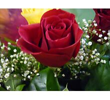 Red Red Roses Photographic Print