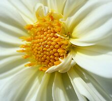 Pure White by Andreia Moutinho