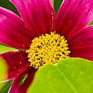 Flower  by Nala