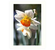 Daffodil Bells Art Print