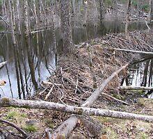 Beaver dam by JohnEvans