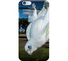 sunnie my bird majorca central victoria  iPhone Case/Skin